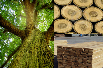 Những lưu ý khi chọn tủ bếp gỗ sồi